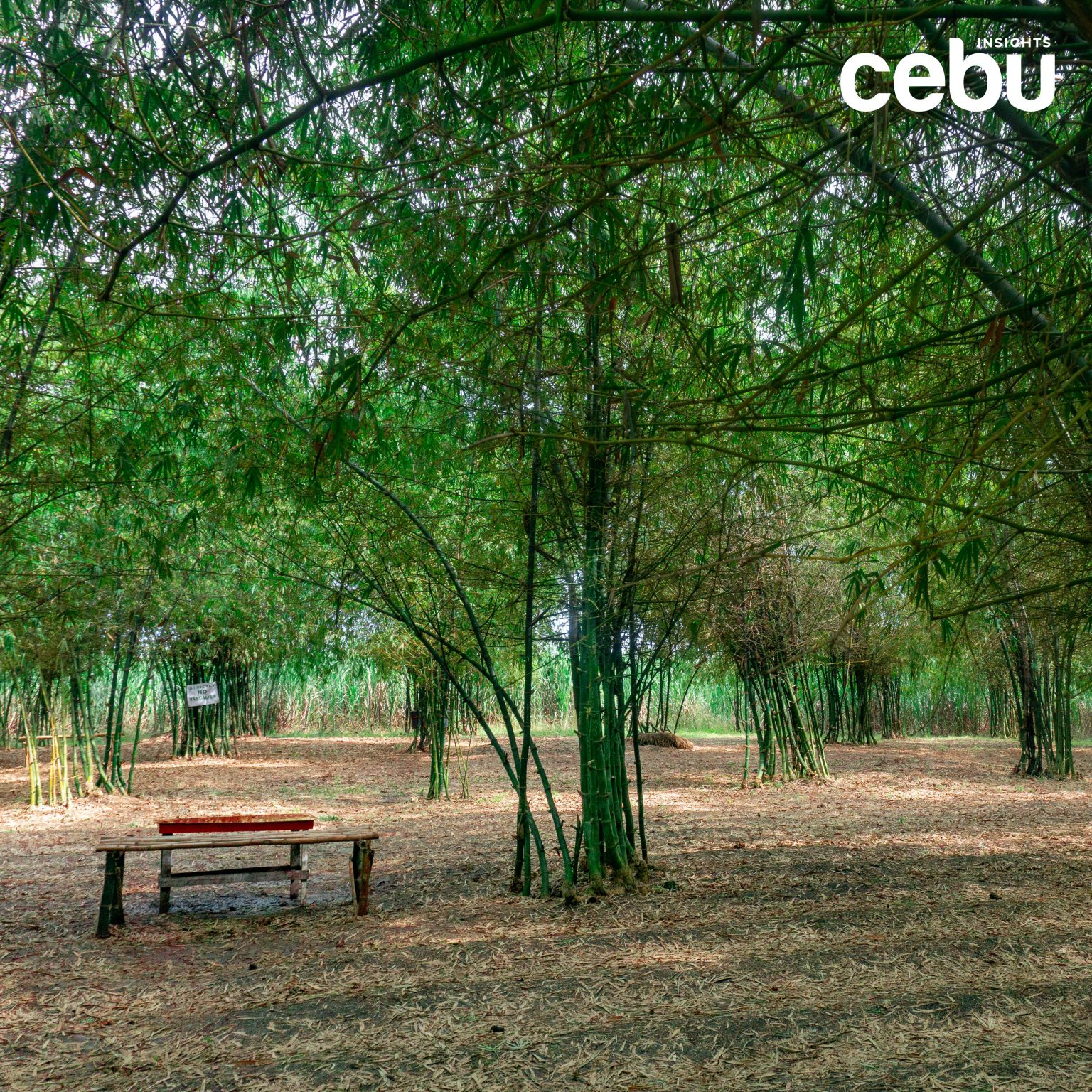 Bench at the Medellin Bamboo Forest