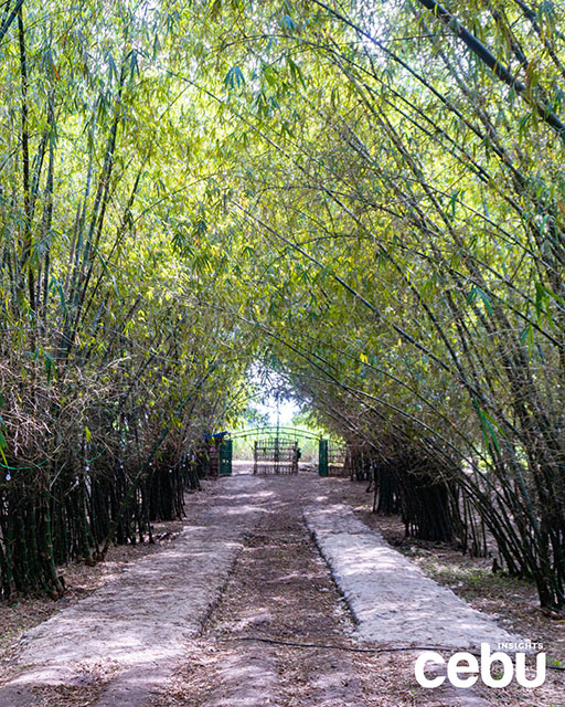 Bamboo Forest in Medellin
