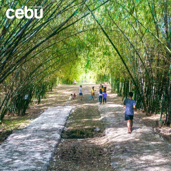 Walkway at the Bamboo Forest